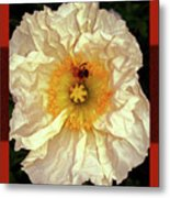 Honey Bee In Stunning White And Gold Flower Metal Print