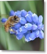 Honey Bee On Blue Flowers Metal Print