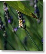 Honey Bee On Flower #4 Metal Print