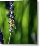 Honey Bee On Flower #5 Metal Print