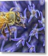 Honey Bee On Globe Allium Metal Print