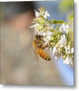 Honey Bee On Herb Flowers Metal Print