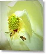 Honey Bees And Magnolia II Metal Print