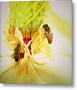 Honey Bees And Magnolia Metal Print