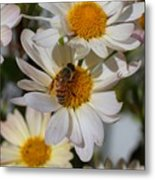 Honeybee And Daisy Mums Metal Print