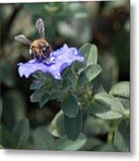 Honeybee On Blue Daze Metal Print