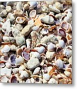 Honeymoon Island Shells Metal Print