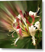 Honeysuckle Breeze Metal Print