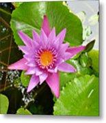 Honolulu Water Lily Metal Print