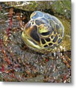 Honu In The Water Metal Print