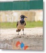 Hooded Crow On A Wall Metal Print