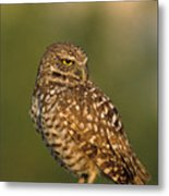 Hoot A Burrowing Owl Portrait Metal Print