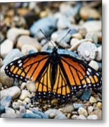 Hope Of The Monarch Butterfly Metal Print