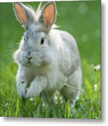 Hopping Rabbit Metal Print