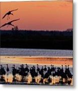 Horicon Marsh Cranes #5 Metal Print
