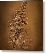 Horicon Marsh - Wildflower Golden Glow Metal Print