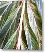 Horizon Of Palm Metal Print