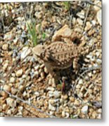Horned Lizard Metal Print