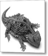 Horned Lizard  Metal Print