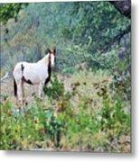 Horse 017 Metal Print