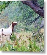 Horse 018 Metal Print