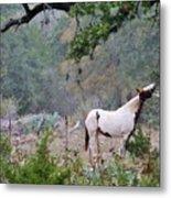 Horse 019 Metal Print