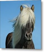 Horse And Blue Sky Metal Print