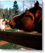 Horse And Cat Nuzzle Metal Print