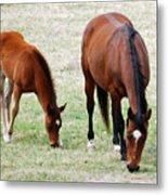 Horse And Colt Metal Print