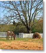 Horse And Hay Metal Print