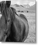 Horse And Sawtooth Mountains Metal Print