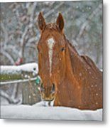 Horse And Snowflakes Metal Print