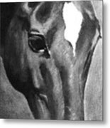 Horse Art Horse Portrait Red Black And White Metal Print