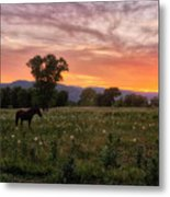 Horse At Sunset Metal Print