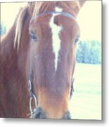Horses Use Complex Facial Expressions Nearly Identical To Humans  Metal Print by Hilde Widerberg