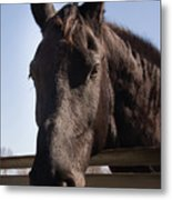Horse By A Fence. Metal Print