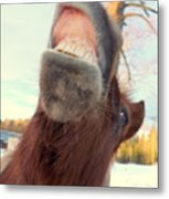 Horse Facial Expressions Are Nearly Identical To Those Of Humans Metal Print