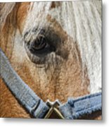 Horse Close Up Metal Print