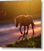 Horse Crossing The Road At Sunset Metal Print