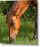 Horse Cuisine  Metal Print