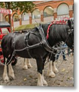 Horse Dray Metal Print