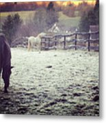 Horses On A Frosty Pasture Metal Print