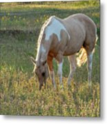 Horse Feeding In Grass Farm With Sunset Light From The Left Metal Print