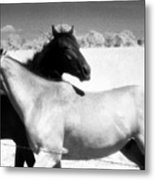 Horse Friends Two  Metal Print