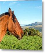 Horse Head Closeup Metal Print