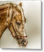 Horse Head Portrait Metal Print