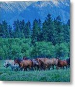 Horse Herd Metal Print