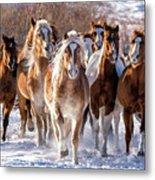 Horse Herd In Snow Metal Print