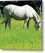 Horse In A Field Of Flowers Metal Print