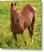 Horse In A Field With Flowers Metal Print